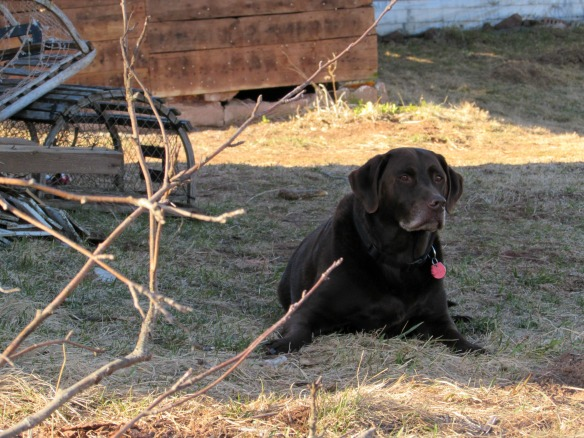 Enjoying the shade of the barn